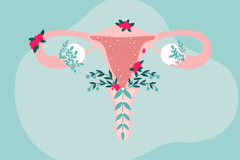 uterus, menopause
